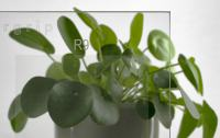 Glas Lasergrip mit Rutschhemmung R9